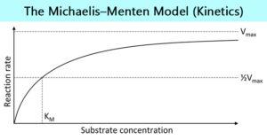 The Michaelis–Menten model