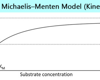 The Michaelis–Menten model