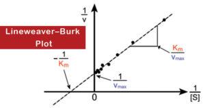 Lineweaver–Burk Plot
