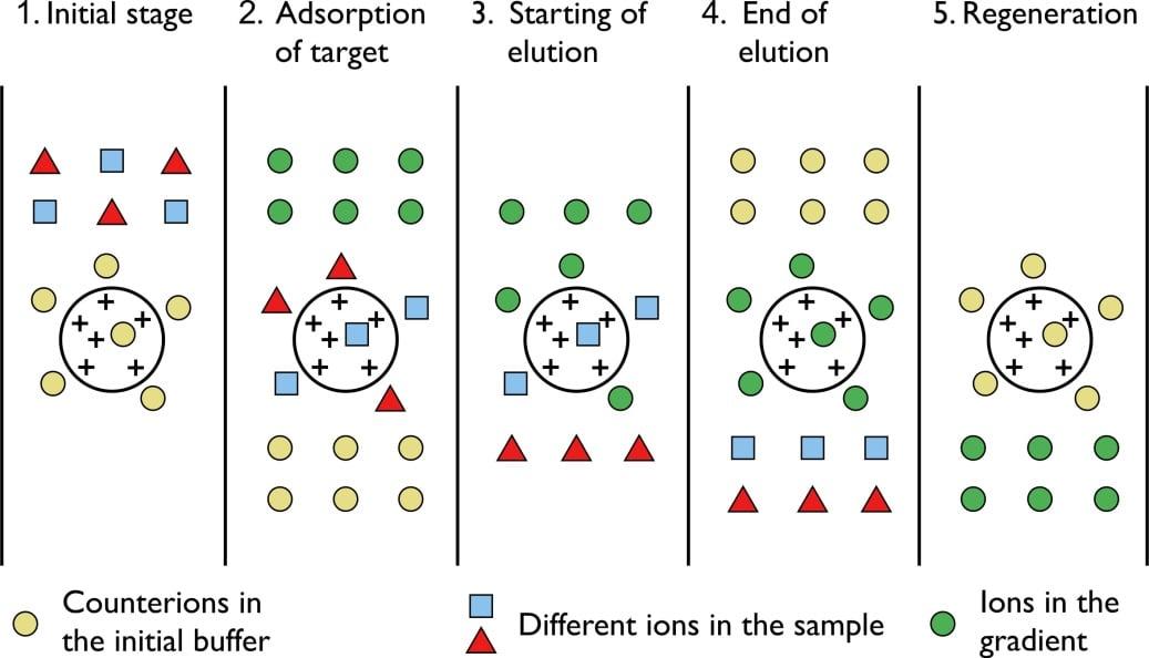 Working Principle of ion exchange chromatography