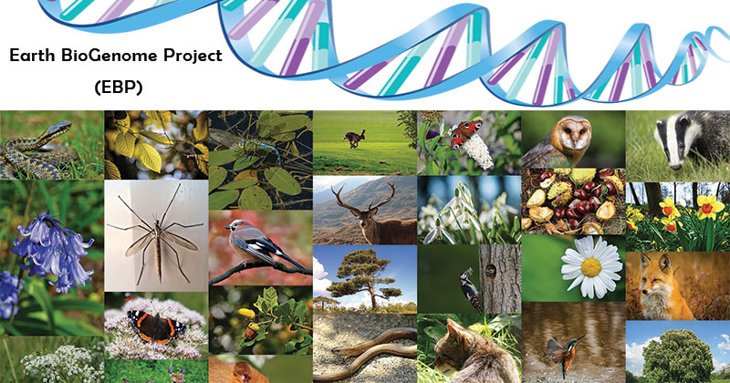 The Earth BioGenome Project (EBP)
