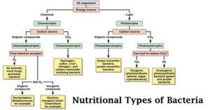 Classification of Bacteria on the basis of Nutrition