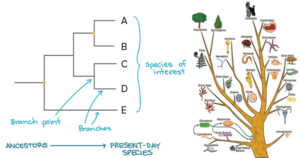 How to construct a Phylogenetic tree