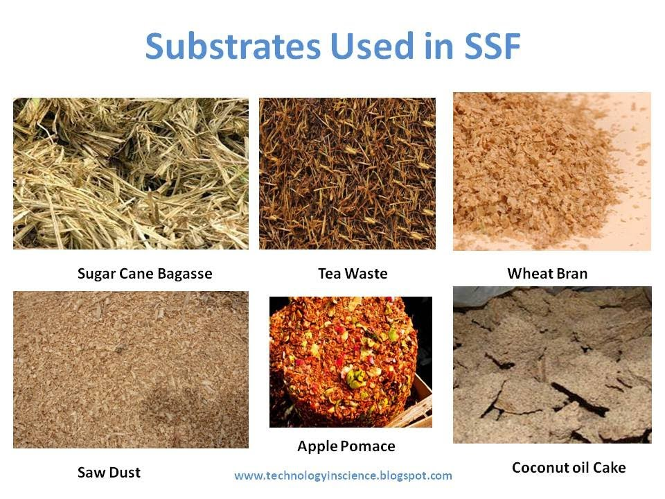 Solid State Fermentation (SSF) Substrate