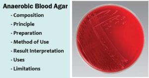 Anaerobic Blood Agar