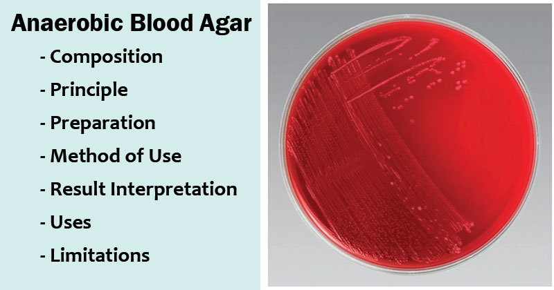 Anaerobic Blood Agar