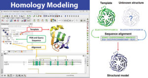 Homology Modeling- Working, Steps, and Uses