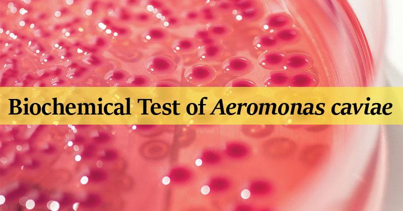 Biochemical Test of Aeromonas caviae