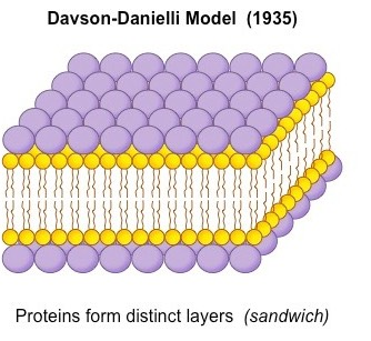Davson–Danielli model
