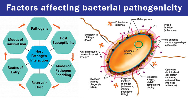 Factors affecting bacterial pathogenicity