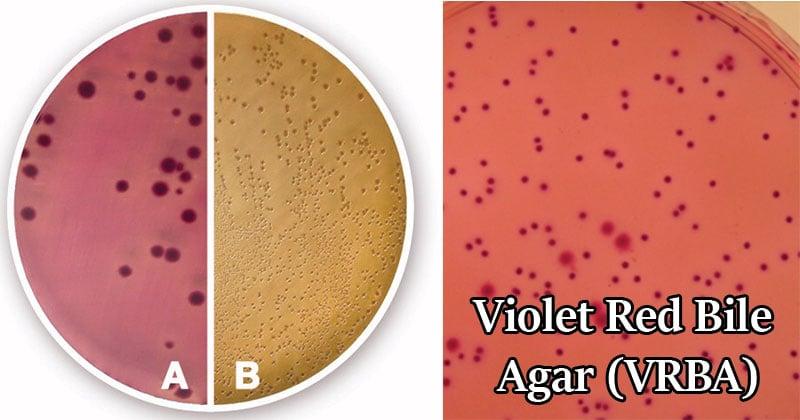 Violet Red Bile Agar (VRBA)