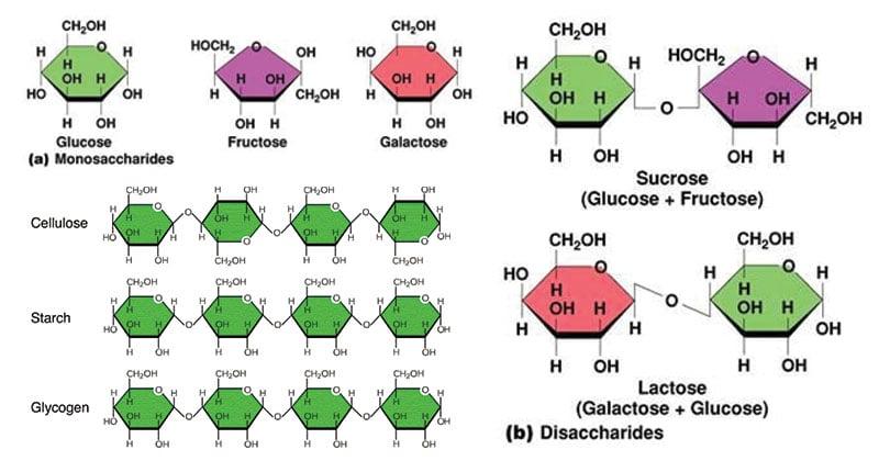 Carbohydrates Monosaccharides Disaccharides Polysaccharides