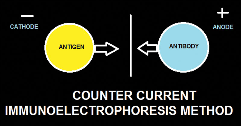 Counter Current Immunoelectrophoresis
