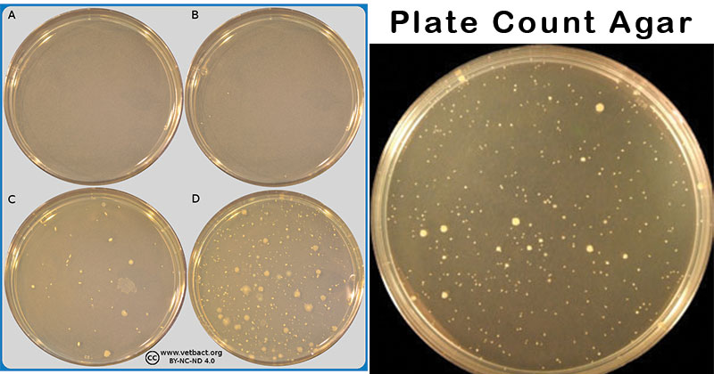 Plate Count Agar