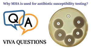 Why MHA is used for antibiotic susceptibility testing