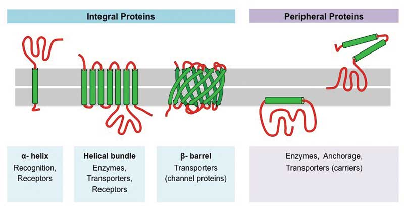 Membrane Proteins