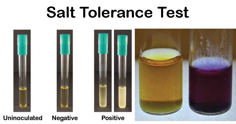 Salt Tolerance Test