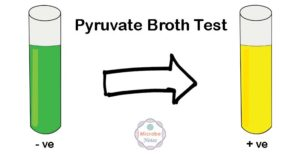 Pyruvate Broth Test