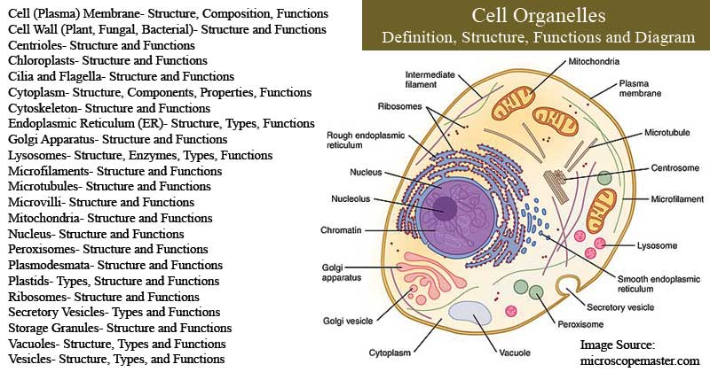 Cell Organelles Notes including Definition, Structure, Functions, and Diagram