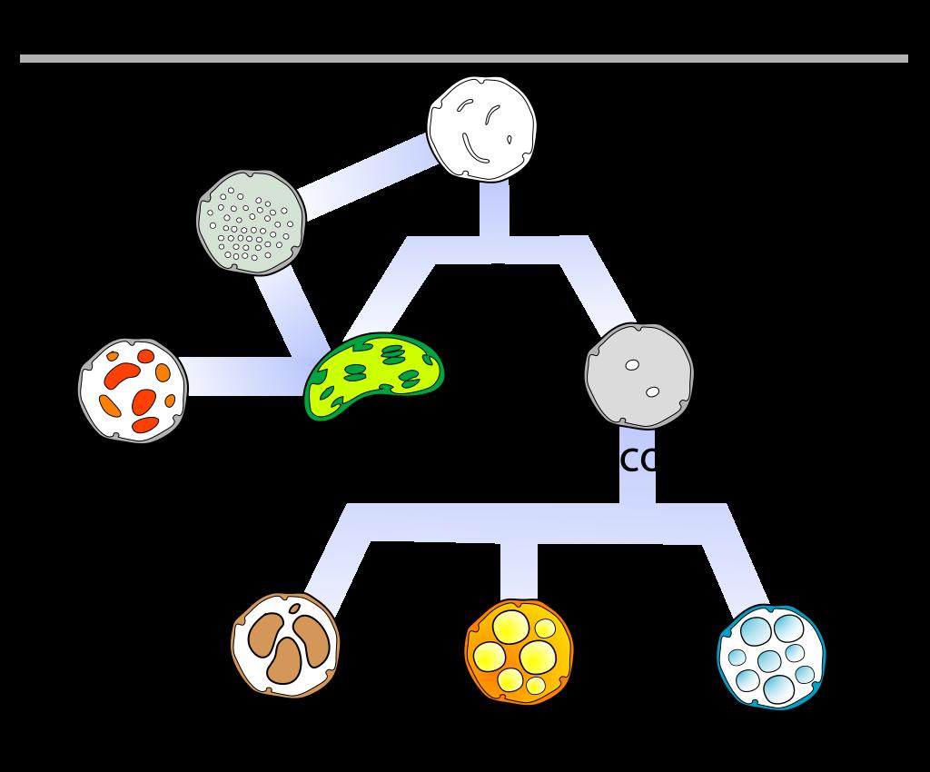 Plastids Diagram
