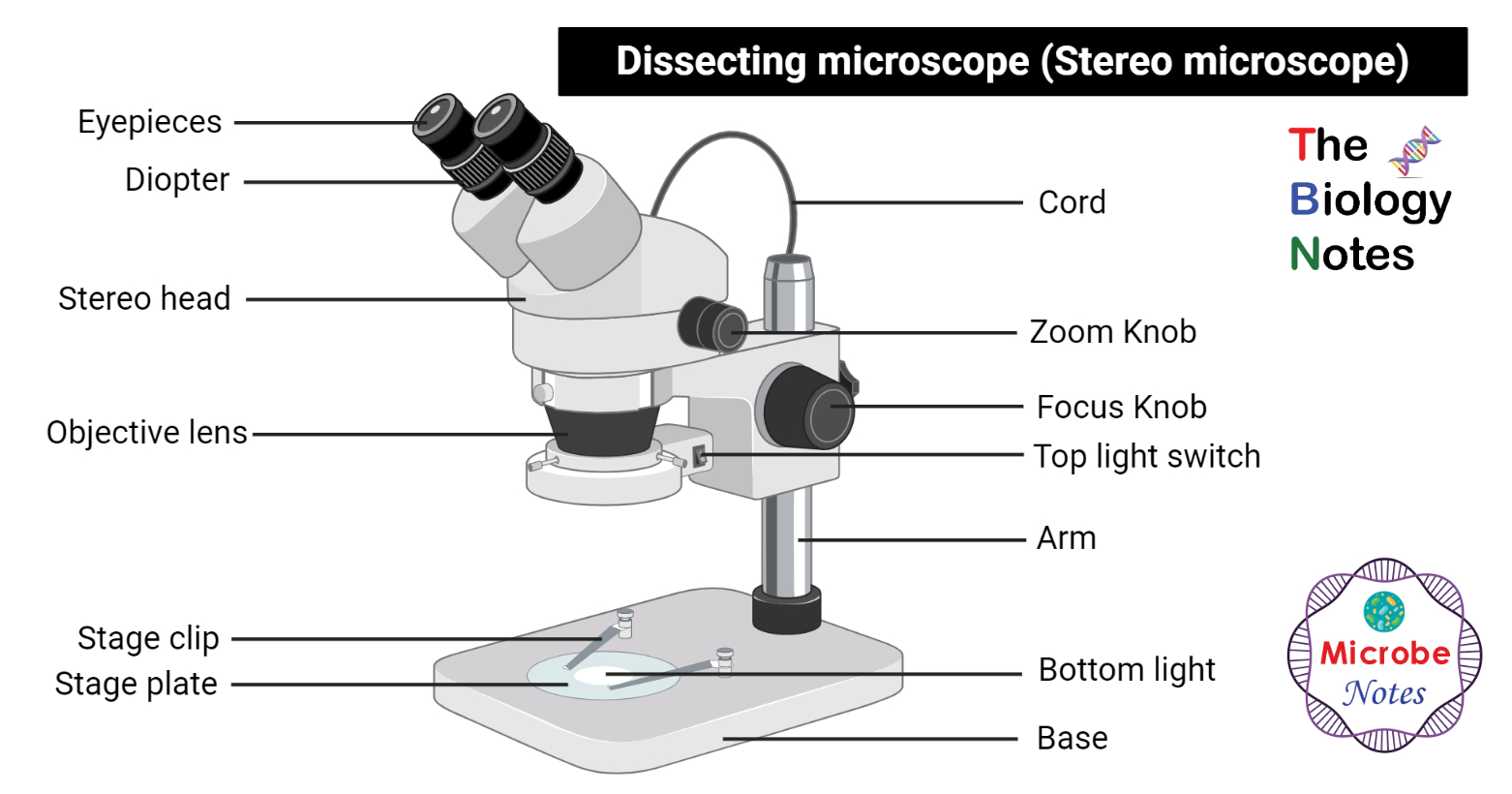 Labeled Dissecting microscope (Stereo or stereoscopic microscope)
