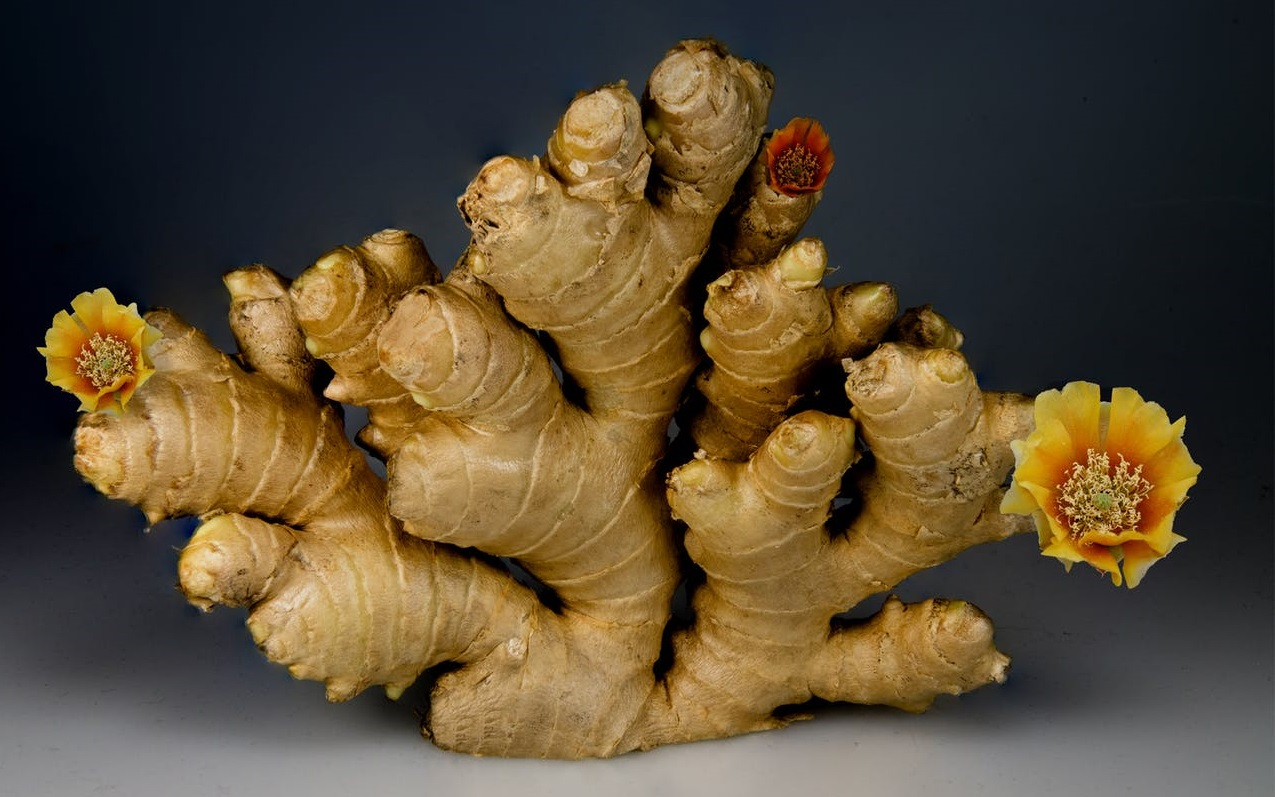Ginger as Immune Booster Food