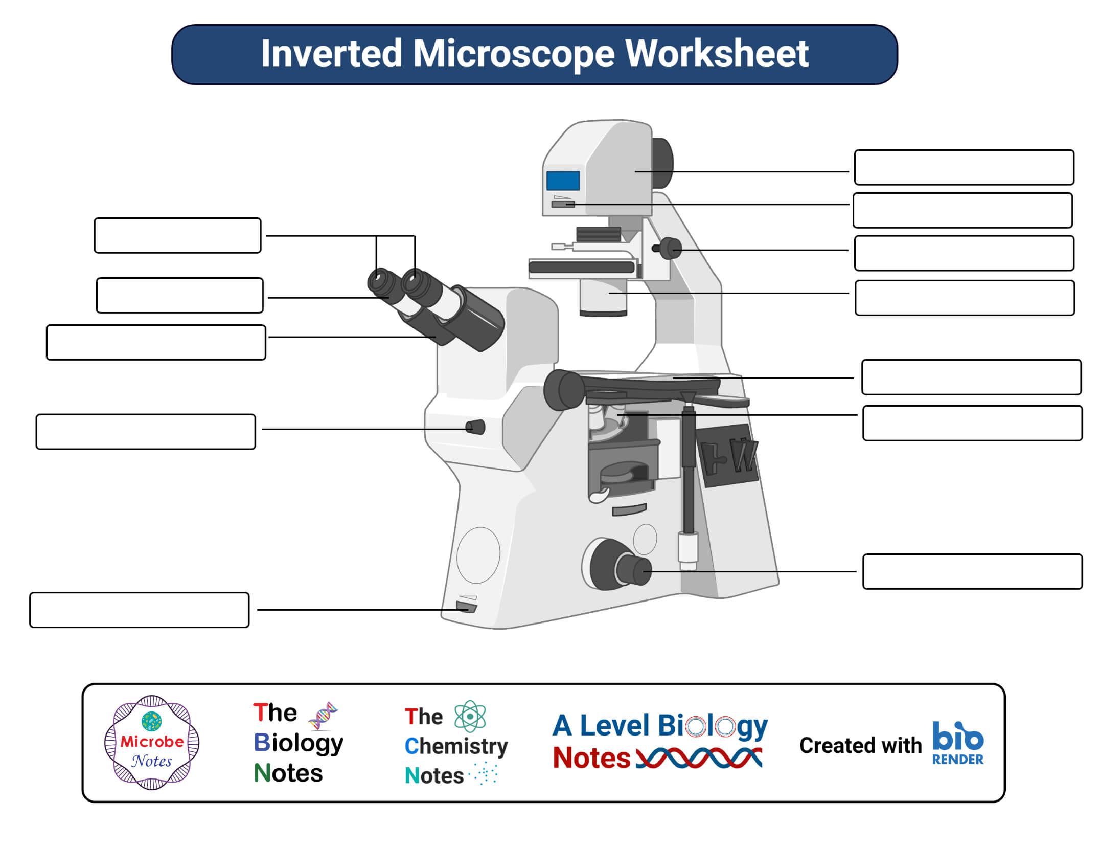 Inverted Microscope Worksheet