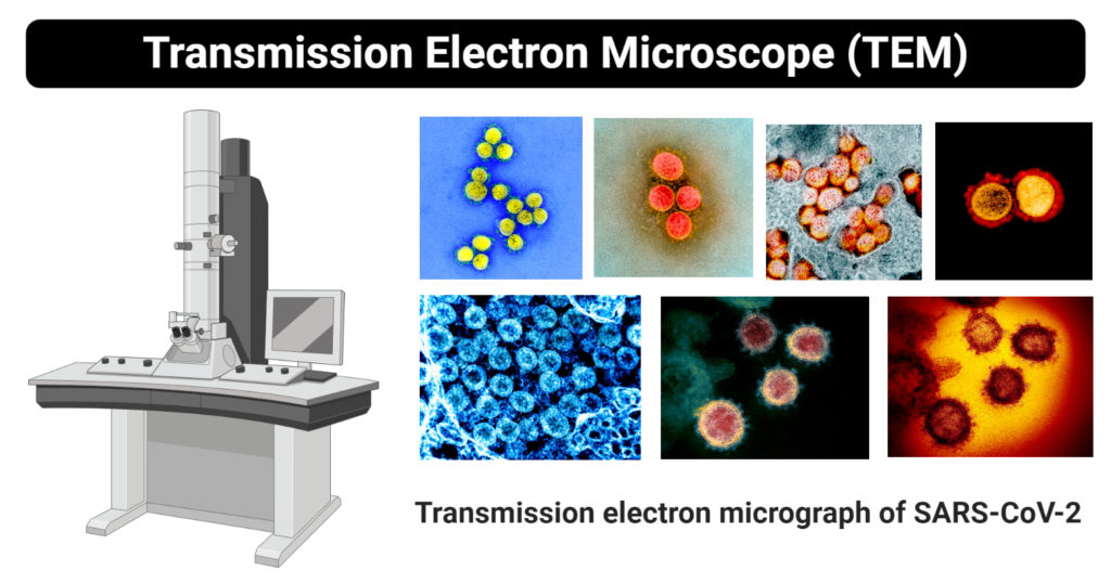 Principle Of Electron Microscopy And Its Applications
