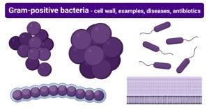 Gram-positive bacteria