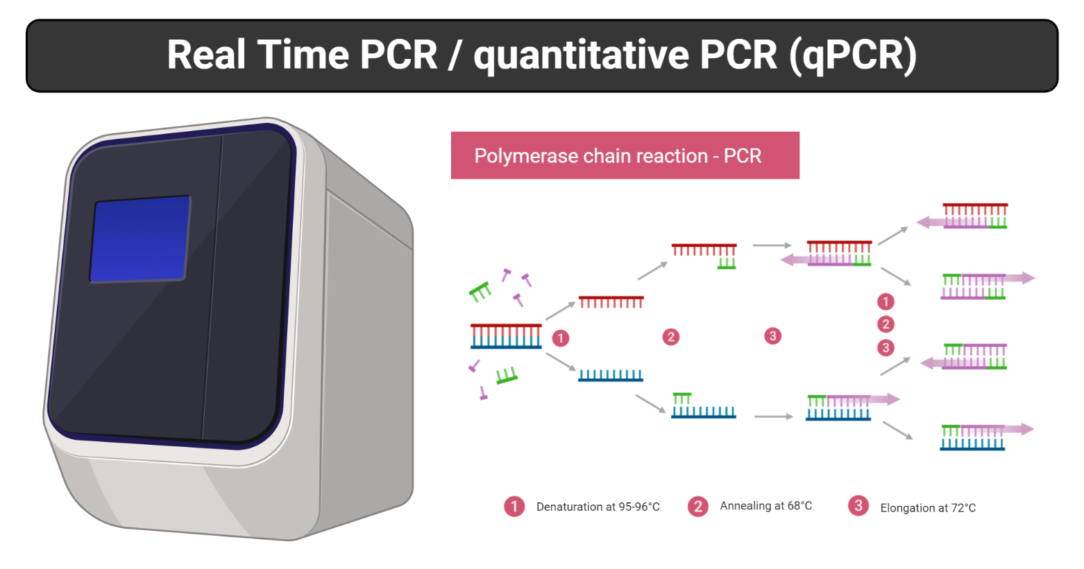 Real Time PCR- Principle, Process, Markers, Advantages, Uses