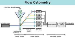 Flow Cytometry-Definition, Principle, Parts, Steps, Types, Uses