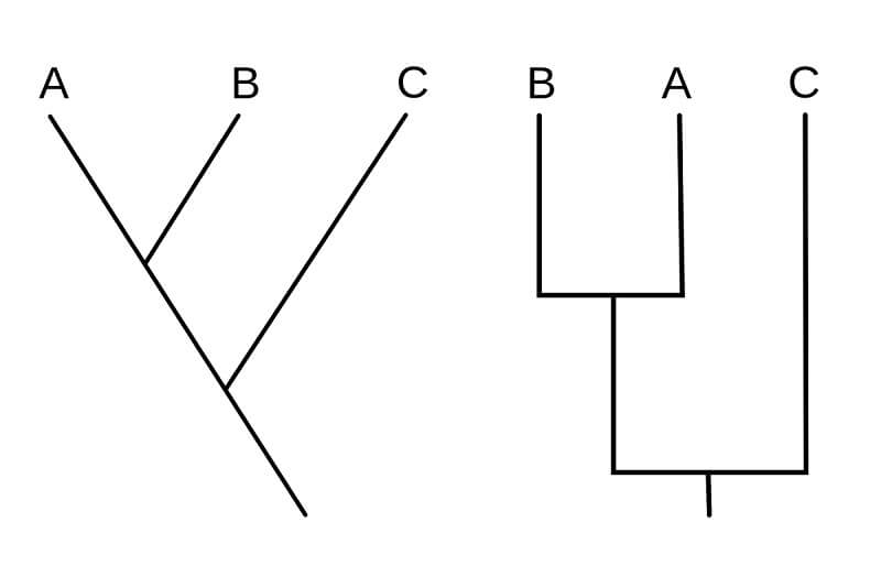 Different styles of cladograms