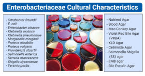 Enterobacteriaceae Cultural Characteristics