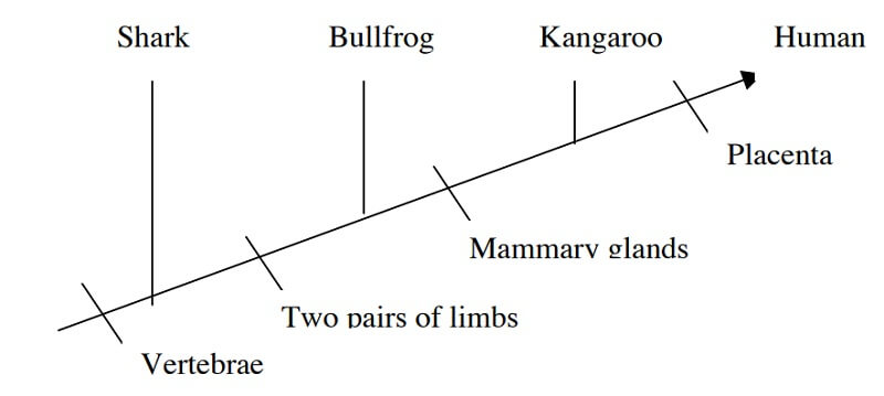 Venn diagram into a cladogram