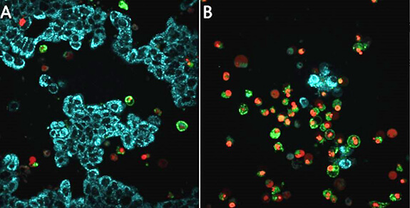 Detection of caspases, cleaved substrate, regulators and inhibitors