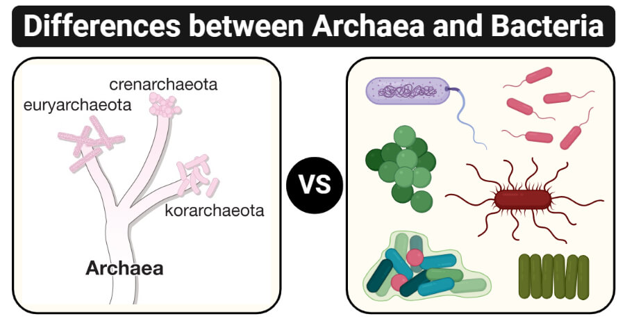 Differences between Archaea and Bacteria (Archaea vs Bacteria)