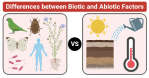 Differences between Biotic and Abiotic Factors (Biotic vs Abiotic Factors)
