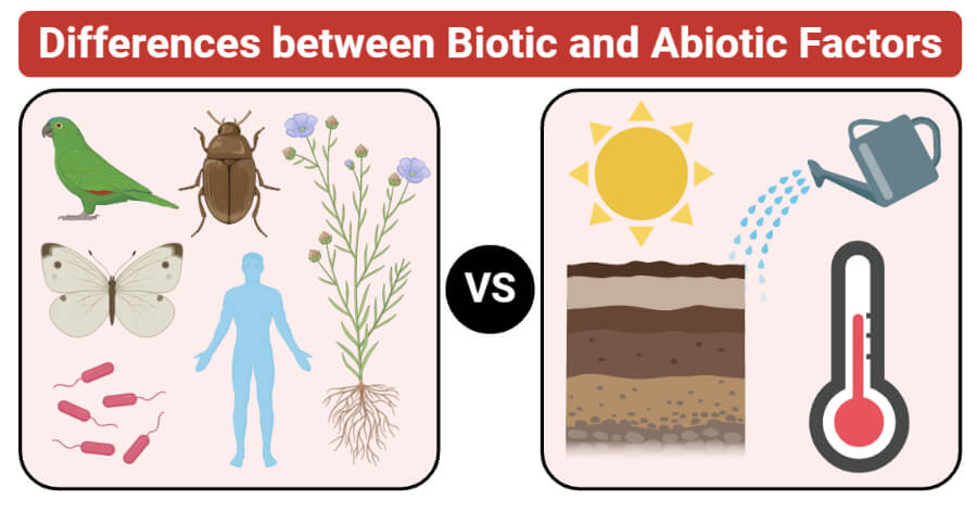 Differences between Biotic and Abiotic Factors (Biotic vs Abiotic Factors)