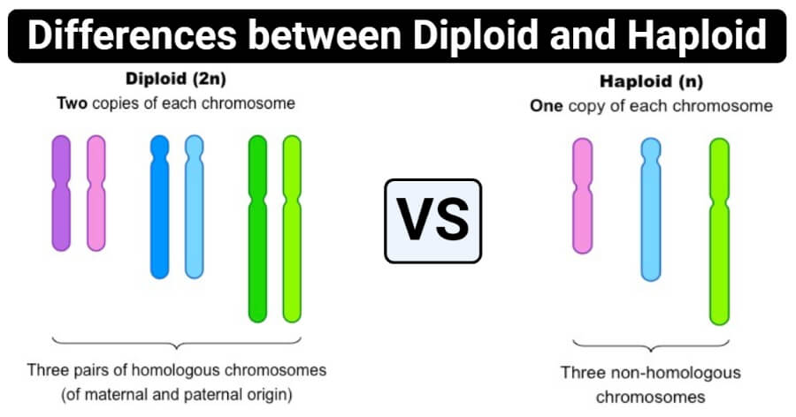 Differences between Diploid and Haploid (Diploid vs Haploid)