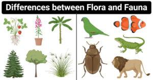 Differences between Flora and Fauna (Flora vs Fauna)