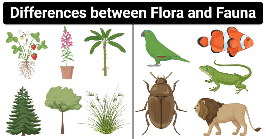 Differences between Flora and Fauna (Flora vs Fauna)