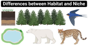 Differences between Habitat and Niche (Habitat vs Niche)