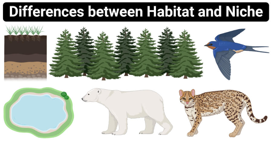Differences between Habitat and Niche (Habitat vs Niche)