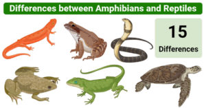 Differences between amphibians and reptiles (Amphibians vs Reptiles)