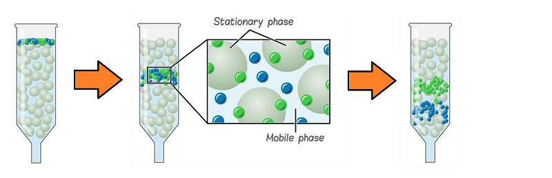 stationary phase and mobile phase