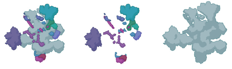 Spliceosomes