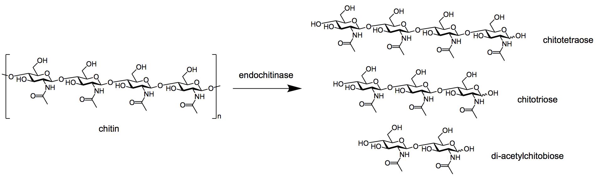 Endochitinases