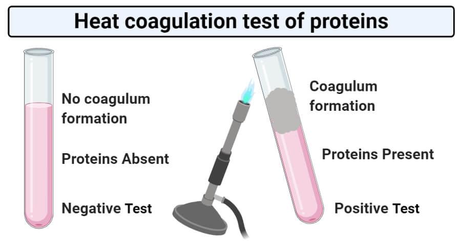 Heat coagulation test of proteins