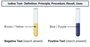 Iodine Test- Definition, Principle, Procedure, Result, Uses