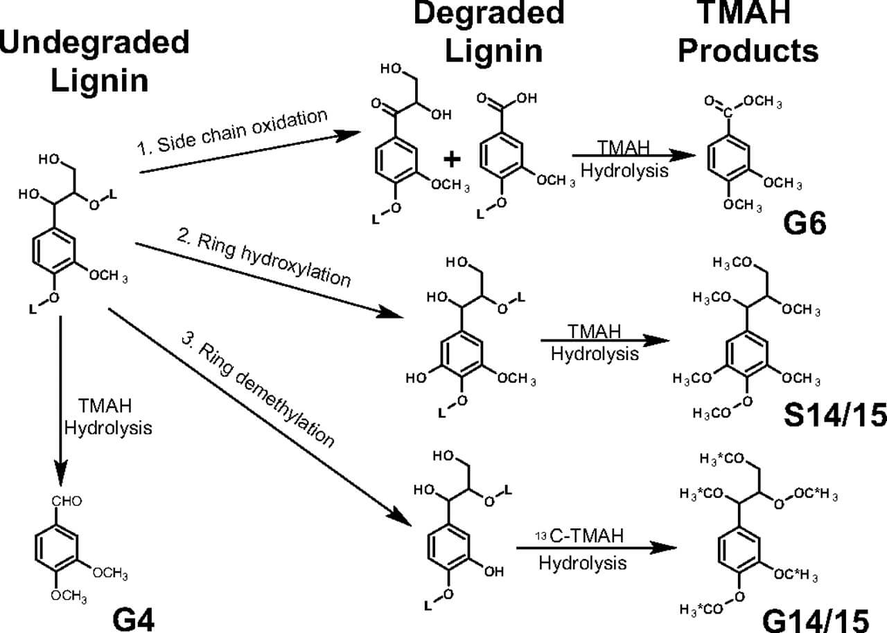 Mechanisms of microbial degradation of lignin